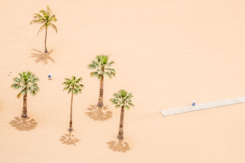 Strandfoto Aufnahme von Palmen von oben