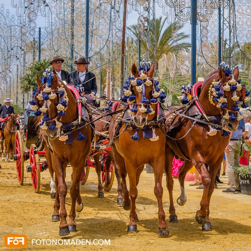 Feria del Caballo in Jerez de la Frontera im Mai, Andalusien