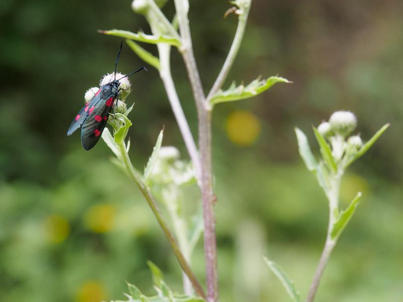 Schlechtes Bildbeispiel: Schmetterling vor unruhigem Hintergrund