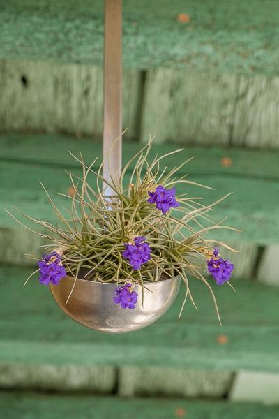 Lila blühende Pflanze in Schöpflöffel