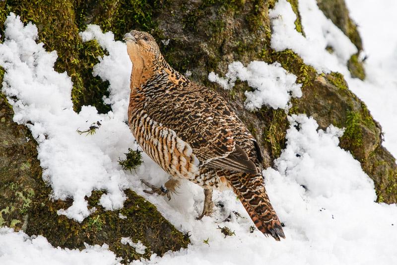 Vogel am Waldboden