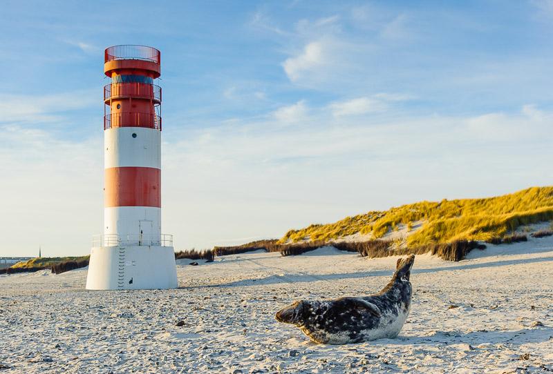 Helgoland Strand, Leuchtturm mit Robbe