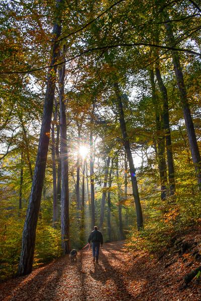 Wald Fotografie: Waldweg im Gegenlicht mit Spaziergänger mit Hund