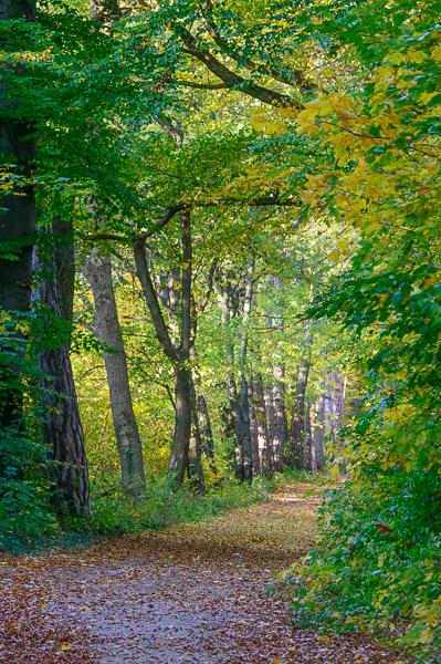 Waldweg mit grünen Bäumen