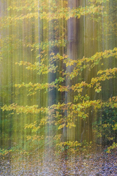 Wald Fotografie Doppelbelichtung Herbstwald