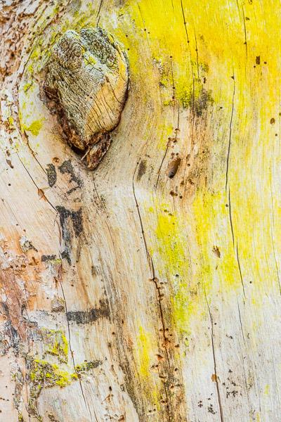 Wald Fotografie Nahaufnahme von Rinde mit gelber Flechte