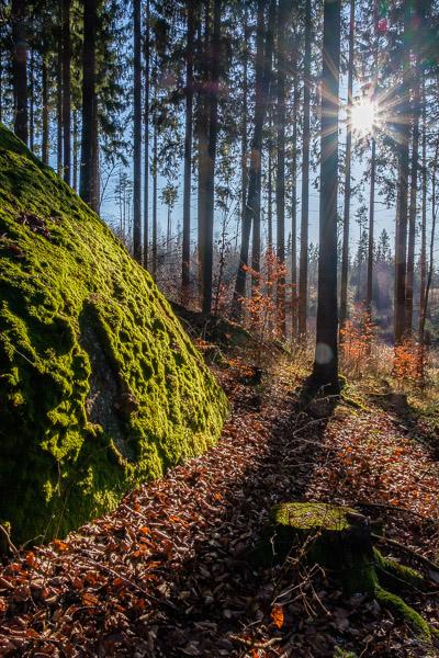Wald Fotografie mit Blendenstern und bemoostem Hügel