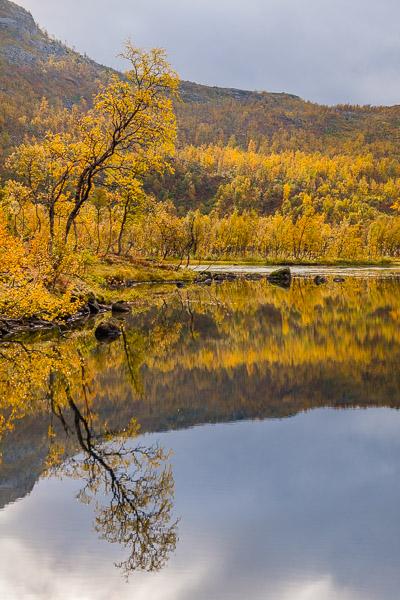 Gelbes Herbstwald-Foto gespiegelt im Wasser