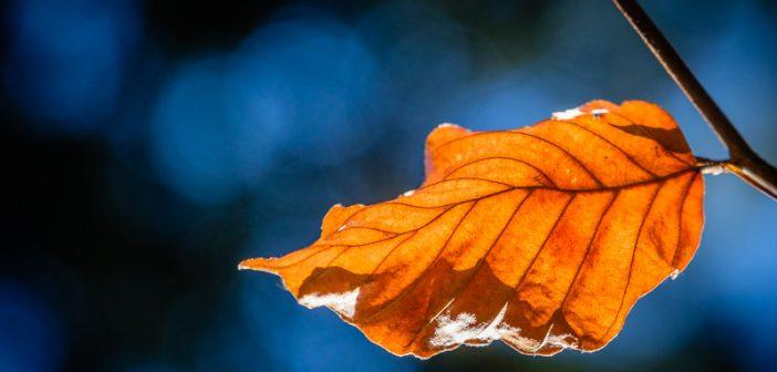 Wald Fotografie – 10 Fotoideen für jede Jahreszeit