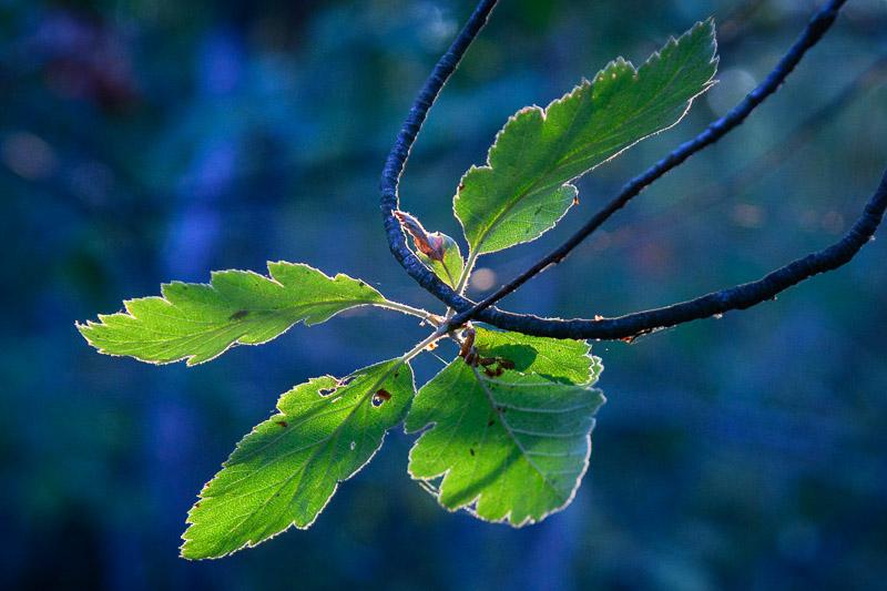 Wald Nahaufnahme von grünen Blättern