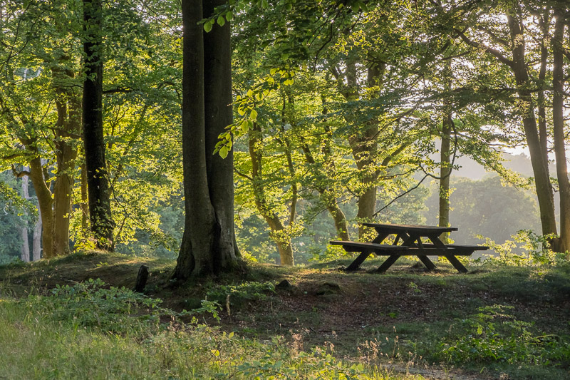 Wald Fotografie: Picknickplatz auf Waldlichtung