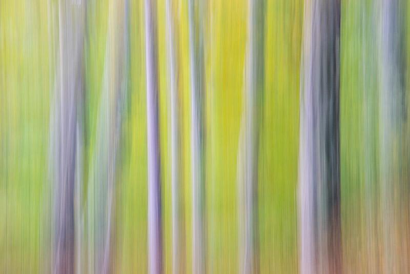 Bildgestaltung im manuellen Modus: Panning Waldfoto