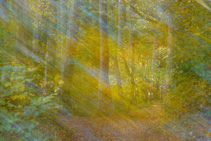 Herbstwald Doppelbelichtung schräg geschwenkt