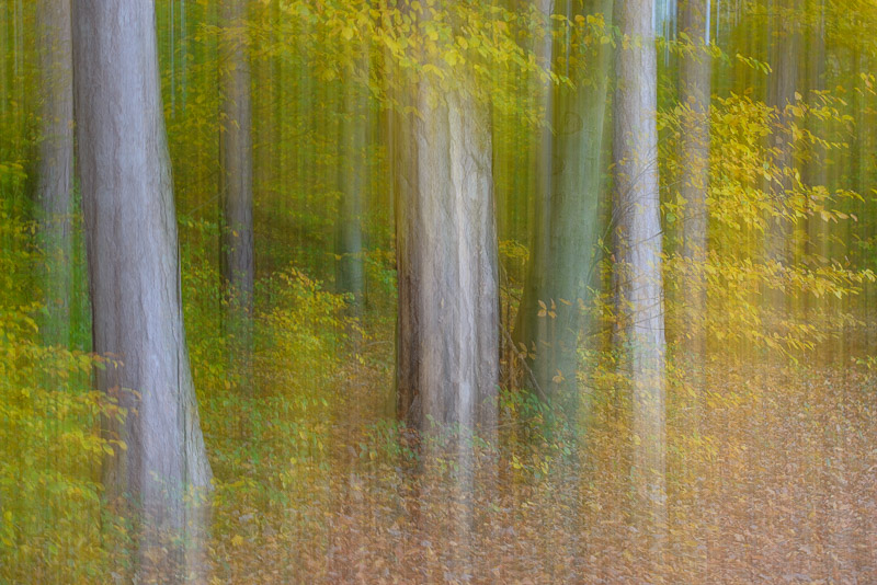 Doppelbelichtung von gelbgrünem Herbstwald
