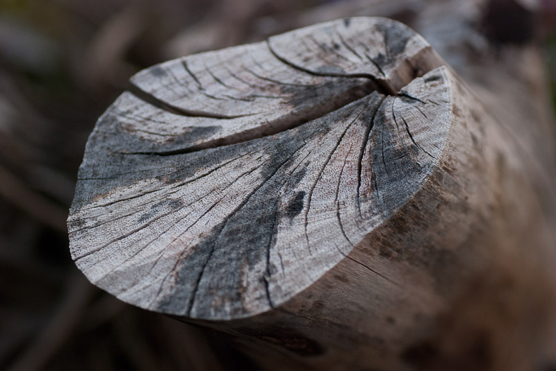 Baumstumpf Nahaufnahme