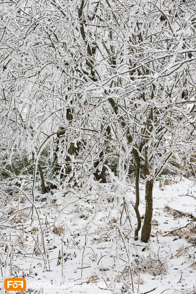 Strauch mit Schnee, wirres Foto