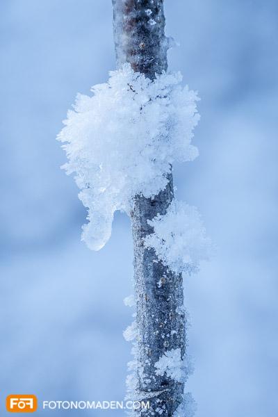Schnee auf Ast, schönes Detail Winterbild