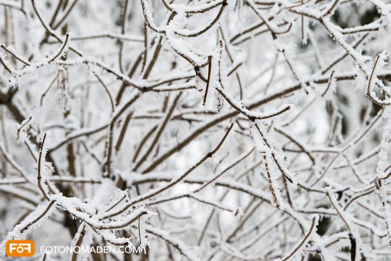 Ästewirrwarr mit Schnee, kein Blickfang