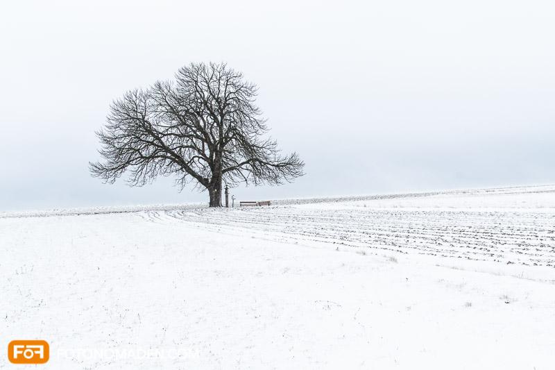 Kahler Baum auf Acker mit Schnee, Winterfoto mit starken Kontrasten
