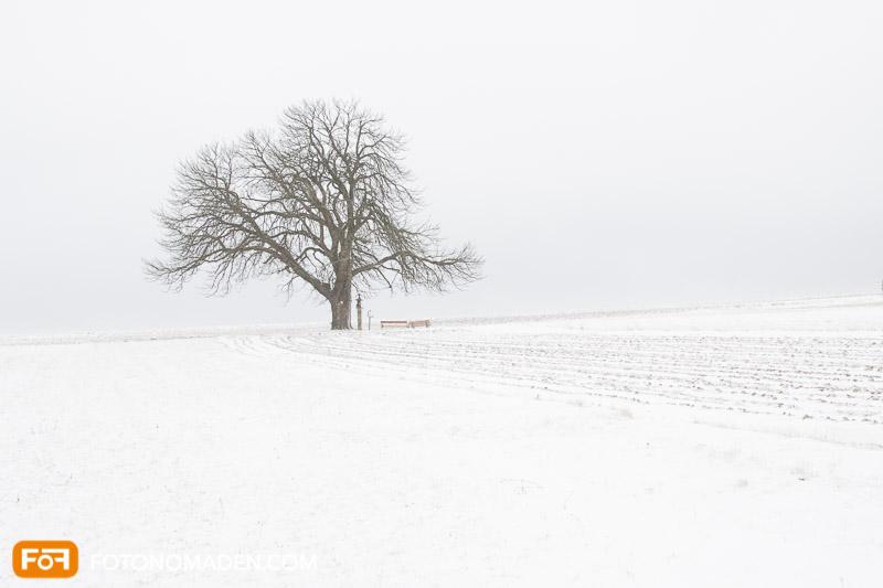 Kahler Baum vor Acker mit Schnee, Winterbild mit blassen Farben
