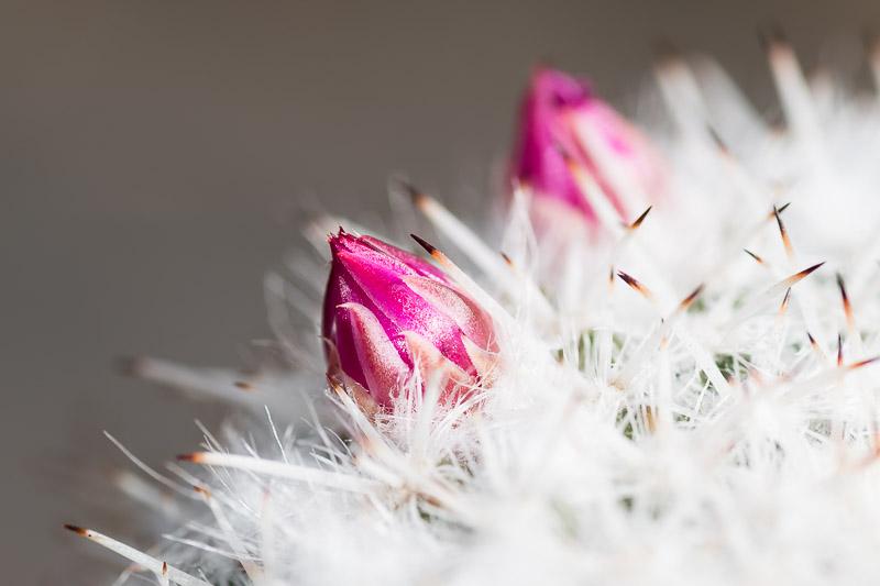 Fotoideen für Zuhause - Nahaufnahme Kaktusblüte