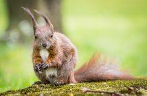 Natur Fotoideen vor der Haustür, Eichhörnchen