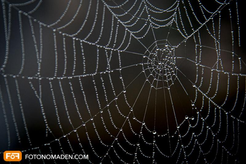 Makrofotografie von Spinnennetz mit Tautropfen