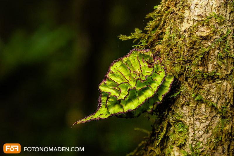 Makrobild von Pflanzendetail
