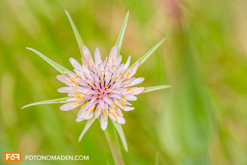 Blume vor verschwommenem Hintergrund im manuellen Modus aufgenommen