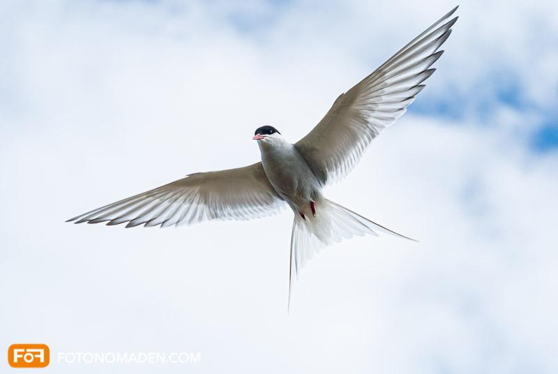 Vogel im Flug eingefroren, aufgenommen im M-Modus