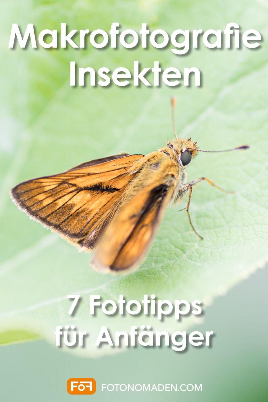 Makrofotografie Insekten Pinterest Pin