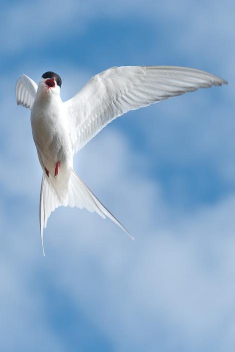 Schönere Fotos machen - Vogel im Flug