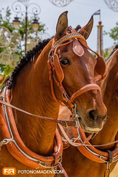 Bildgestaltung mit Automatik: Pferdekopf