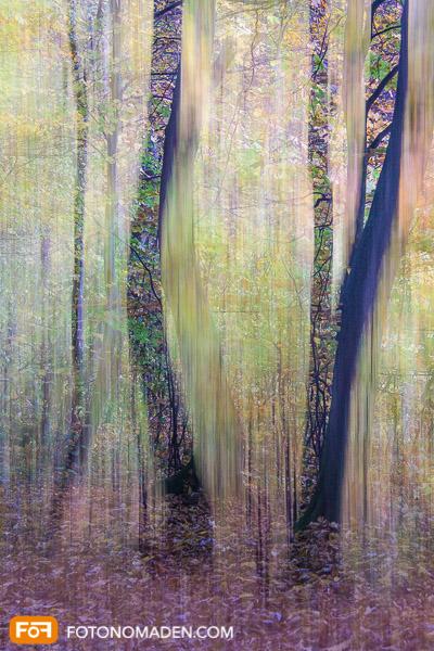 Bildgestaltung im manuellen Modus: Doppelbelichtung Herbstwald