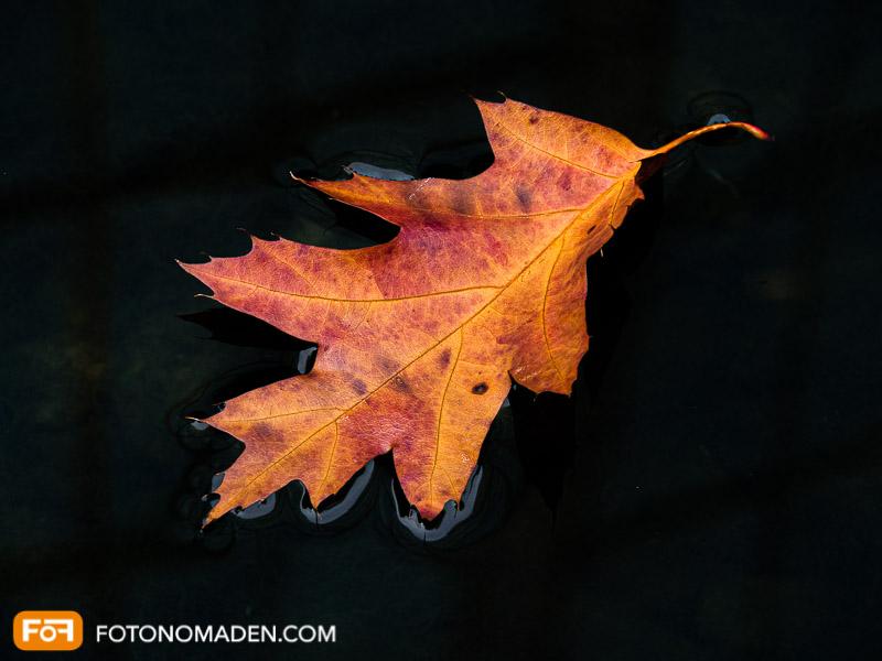 Bildgestaltung im manuellen Modus: Herbstblatt in Wasser