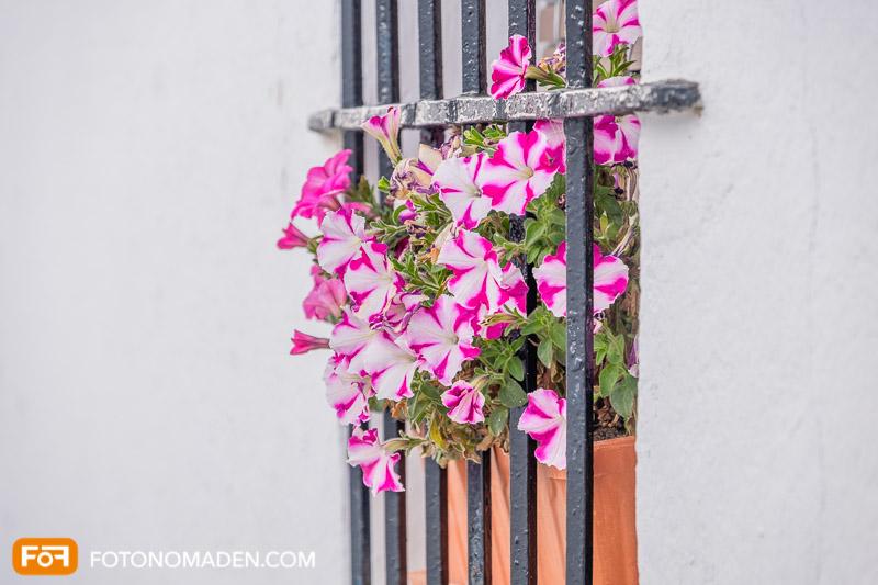 Bildgestaltung mit Automatik: Rosa Blumen hinter Fenstergitter
