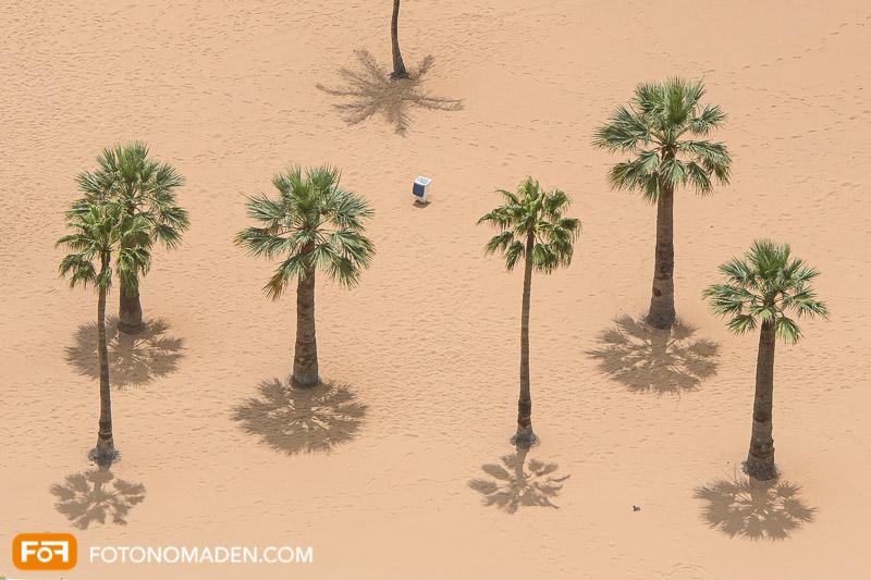 Bildgestaltung mit Automatik: Palmen mit Schatten von oben