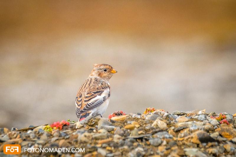 Schöne Herbstbilder: Vogel am Boden