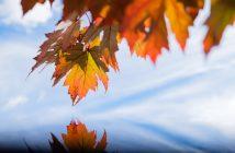 Herbstblätter vor blauem Himmel - schöne Herbstbilder