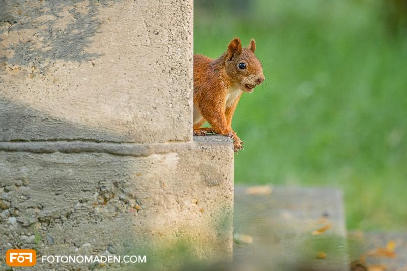 Schöne Herbstbilder: Eichhörnchen auf Grabstein
