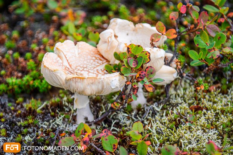 Schöne Herbstbilder: Pilze im Moos