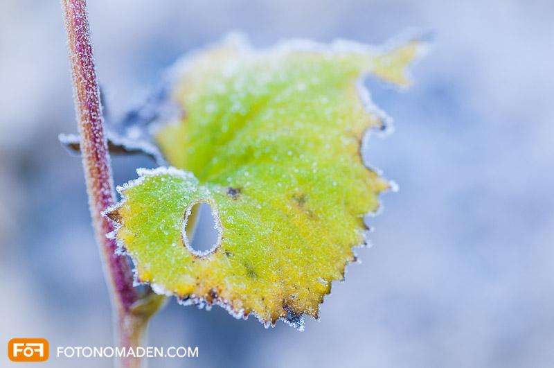Schöne Herbstbilder: Raureif auf grünem Blatt