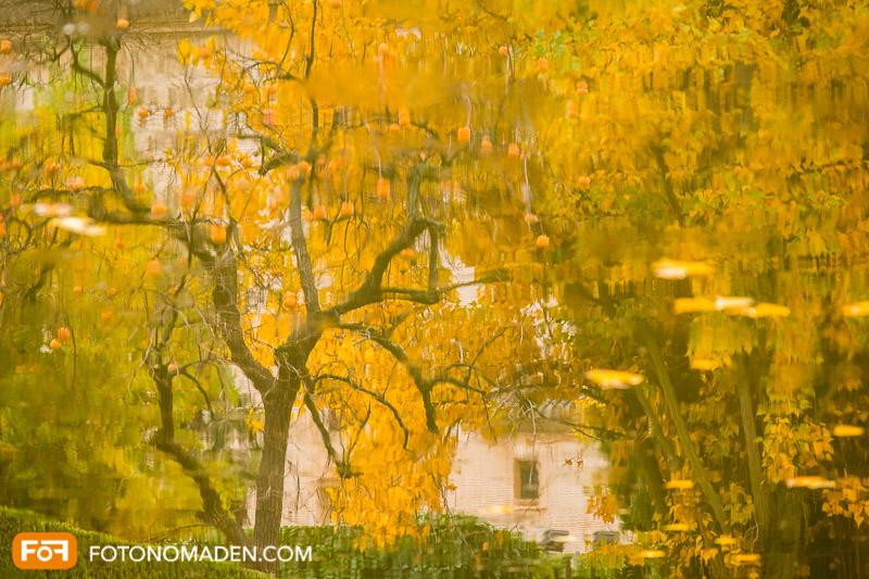 Schöne Herbstbilder: Spiegelung von gelben Herbstbäumen