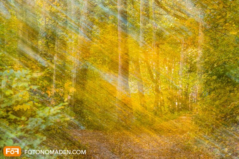 Schöne Herbstbilder: Doppelbelichtung von gelbem Herbstwald