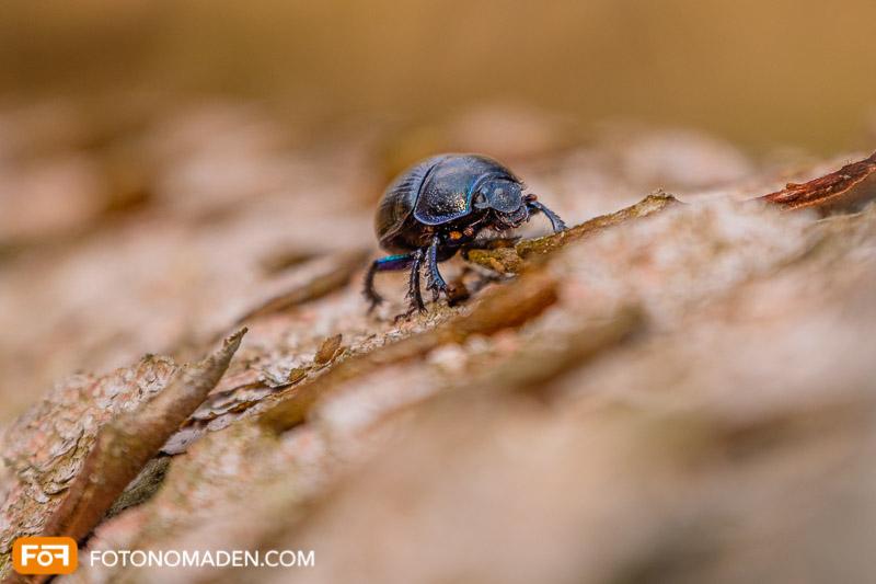 Nahaufnahme schwarzer Käfer auf Baumrinde