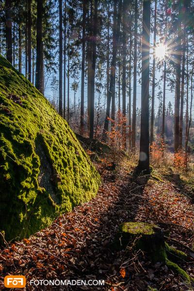 Waldfoto mit Blendenstern