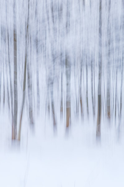 Waldfotografie Panning verschneiter Winterwald