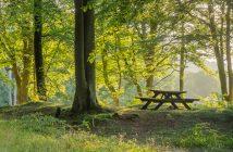 Waldfotografie Tipps