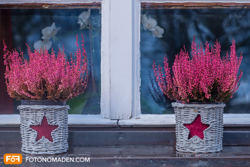 Blumentöpfe am Fensterbrett