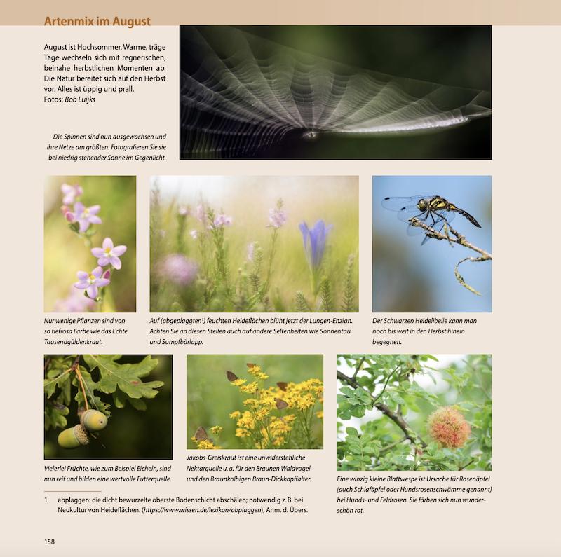 Artenmix August - Naturfotografie durchs ganze Jahr